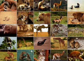 классы позвоночных животных
